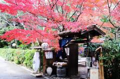 新世界教育新世界日语试听课程免费体验活动等你来